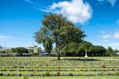 Tree on cemetary headstone christian vitmics of world war II Royalty Free Stock Photos