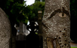 Tree  in cemetery Royalty Free Stock Photography