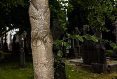 Tree  in cemetery Royalty Free Stock Images