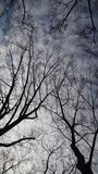 Tree in Central Park New York stock photography