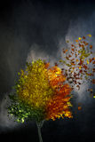 A tree changes with time. A colorful tree changes with time Royalty Free Stock Photo