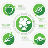 Tree Chart Go Green Flat Design Royalty Free Stock Photography