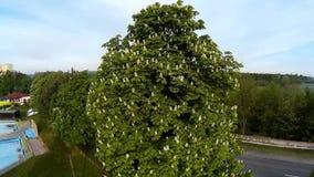 Tree stock video footage