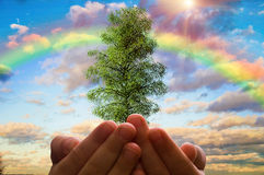 The tree in the children's hands on a background of cloudy sky and rainbow, ecology concept Royalty Free Stock Photos