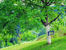 Tree with children swing on green field Stock Photo
