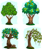 Tree. 4 choices of trees for use in registrations Royalty Free Stock Photos