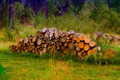 Chopped woods. A tree chopped into pieces for firewood Royalty Free Stock Photography