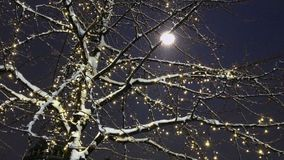 Tree with christmas decoration. At night stock footage