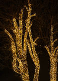 Tree and christmas lights. Nature and holiday background stock photo