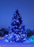 Tree with Christmas Lights in Blue. Night shot of pine tree adorned with blue Christmas lights at dusk, heavily laden with snow Stock Photography