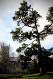 Tree by a church. A green tree against the sky next to a church royalty free stock images