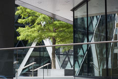 Tree in The City. In the heart of The City of London, an open area with trees participates to the visual quality of any major office buildings Stock Images