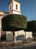 Tree in the city of Almeria Stock Image