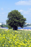 Tree on a city beach Royalty Free Stock Photo