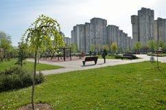 Tree in City Park in Springtime Stock Photo
