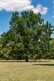 Tree in the city park Stock Photography