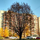 A tree in the city. Royalty Free Stock Images