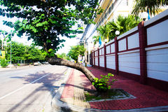 Tree in the city. City view Royalty Free Stock Image