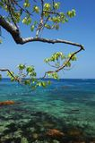 Tree with clear sea Stock Photography