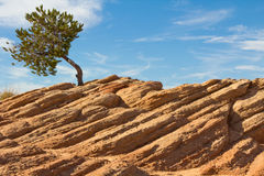 Tree on cliff Royalty Free Stock Image