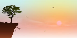 Tree on a Cliff. A Tree on a Cliff with Sunrise, Sunset Stock Photos