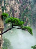 Tree on Cliff Royalty Free Stock Images