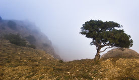 Tree on a cliff in foggy weather. Tree on a cliff in mountains in foggy weather Stock Images