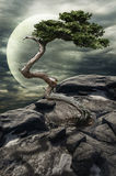 Tree on a cliff royalty free illustration