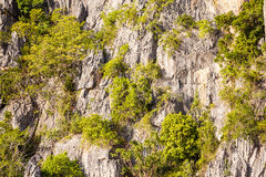 Tree on cliff Royalty Free Stock Photo