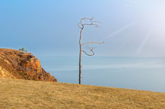 Tree on a cliff. Lonely tree on a cliff Royalty Free Stock Photos