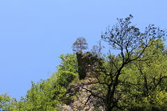 Tree on a cliff. Royalty Free Stock Image