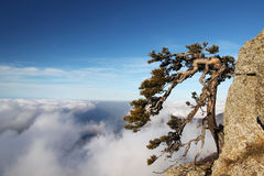 Tree on the cliff in moutain Royalty Free Stock Photography