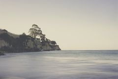 Tree on Cliff Near Body of Water Royalty Free Stock Image