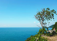 Tree on the cliff Royalty Free Stock Photography