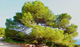 Large tree by the sea stock images