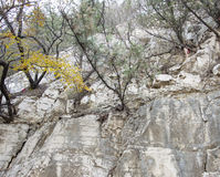 A tree on a cliff Royalty Free Stock Image