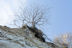 Tree on cliff top Stock Photography
