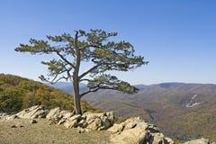 Tree on cliffs edge Royalty Free Stock Photo