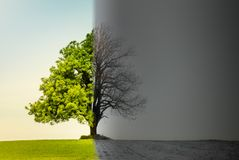 Tree with climate or season change royalty free stock photo