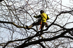 Tree Climber Royalty Free Stock Images