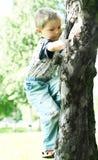 Tree-climber. Little boy climb up on tree Royalty Free Stock Photos