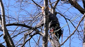 Tree Climber Among Branches stock video footage