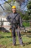 Tree Climber Stock Image