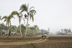 "A tree climber. Locally known as a ""Gachee"" collects juice from a date palm tree.Jessore, Bangladesh Stock Photos"