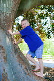 Tree Climbing Royalty Free Stock Photos