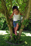 Tree climbing Royalty Free Stock Photography
