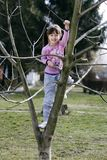 Tree climbing Royalty Free Stock Images