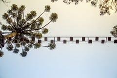 Tree climbing pass sky view Stock Photography
