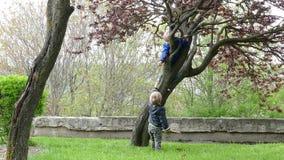 Tree climbing. stock video