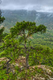 Tree. Clinging on to the side of a rock and managing to hold on. Located on Mount D`Escornalbou - Province of Tarragona - Spain Stock Photos